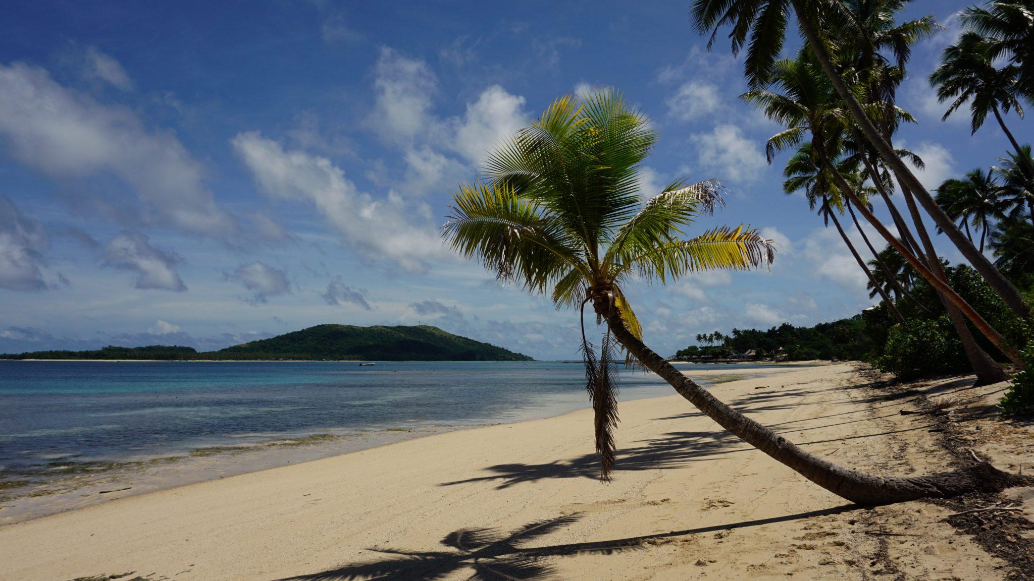 Fidschi: Palme am Traumstrand